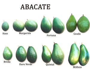 avocado-versions